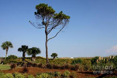 Mike Grubb Wall Art - Photograph - Tree In Paradise by Michael Grubb