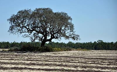Field Photograph - Tree In Plowed Field by Randi Kuhne