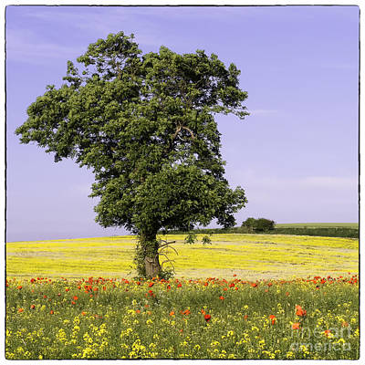 Photograph - Tree In Rape Field No2 by George Hodlin