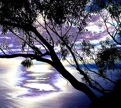 Tree In Silhouette Art Print