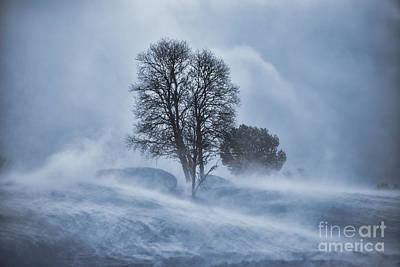 Tree In Snow Blizzard Art Print