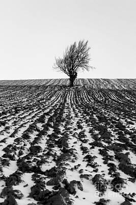 Tree In Snow Art Print by John Farnan