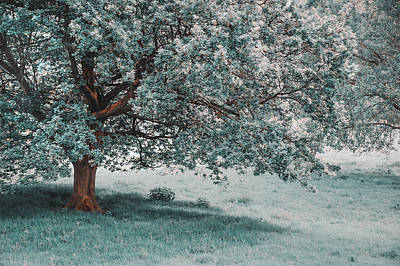 Photograph - Tree In Spring Glory. Nature In Alien Skin by Jenny Rainbow