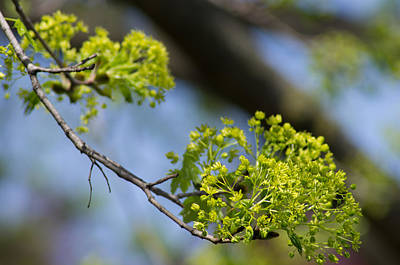 Photograph - Tree In Spring by Steve Atkinson