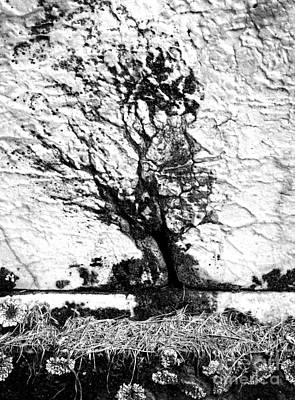Photograph - Tree In Stone by Paul W Faust -  Impressions of Light