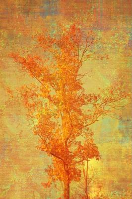Tree In Sunlight Art Print by Suzanne Powers