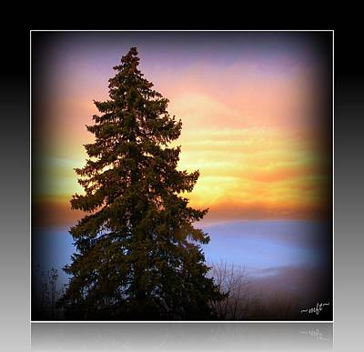 Art Print featuring the photograph Tree In Sunrise by Michelle Frizzell-Thompson