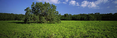 Everglades National Park Photograph - Tree In The Field, Everglades National by Panoramic Images