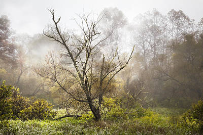 Willows In Fall Photograph - Tree In The Fog by Debra and Dave Vanderlaan