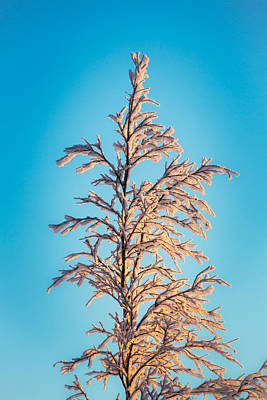 Cold Temperature Photograph - Tree In The Frozen Landscape, Cold by Panoramic Images
