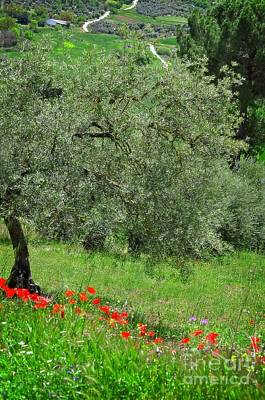 Tree In The Meadow Near Ronda  Art Print by Mary Machare