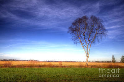 Tree In The Murnauer Moos Art Print