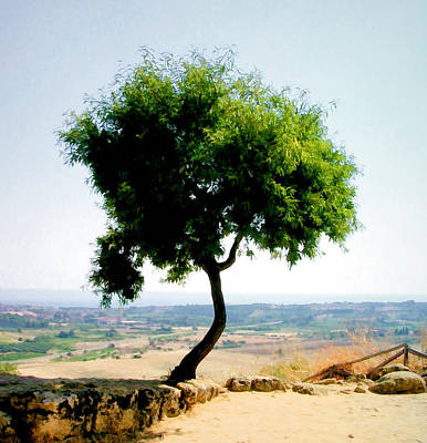 Photograph - Tree In Valley Of The Temples by Caroline Stella