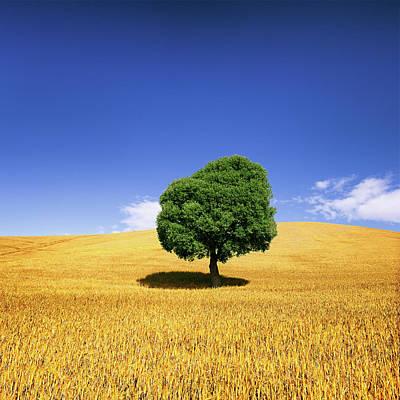 Photograph - Tree In Weat Field by Deimagine