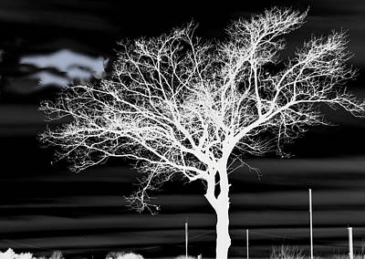 Photograph - Tree In White And Black by Helen Haw