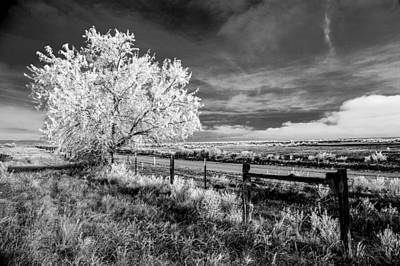 Photograph - Tree In Winter by Jim Snyder
