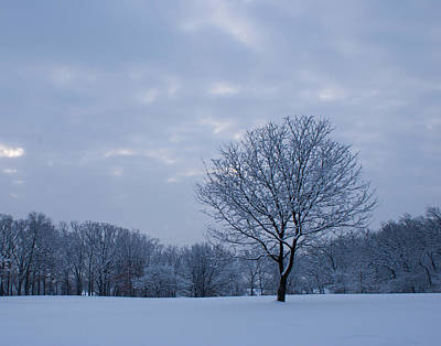 Tree In Winter Art Print by Larry Bohlin