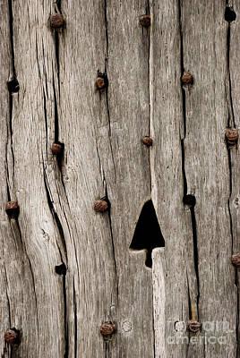 Tree In Wood Art Print by Anne Gilbert
