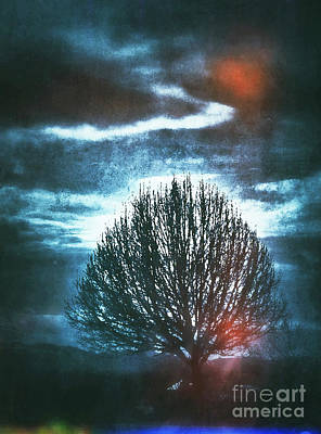 Photograph - Tree Is Not Lost by Patricia Januszkiewicz