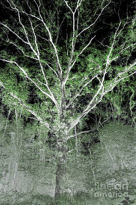 Negative Effect Digital Art - Tree by Jonathan Welch