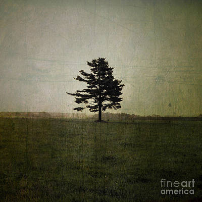Aimelle Photograph - Tree Journey - 01at by Variance Collections