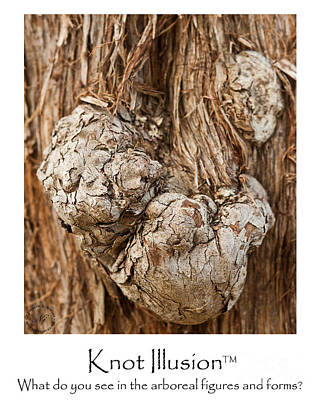 Illusion Photograph - Tree Knot Illusion - Bear Burl Or Puppy Dog by Wayne Nielsen