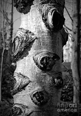 Photograph - Tree Knots Bw by Chalet Roome-Rigdon