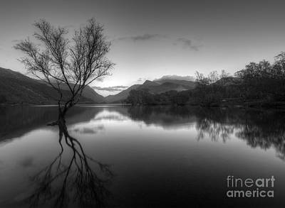 Photograph - Tree Lake by Darren Wilkes