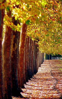 Photograph - Tree Lane In Napa by Jeff Lowe