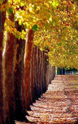 Photograph - Tree Lane In Napa by Jeff Lowe