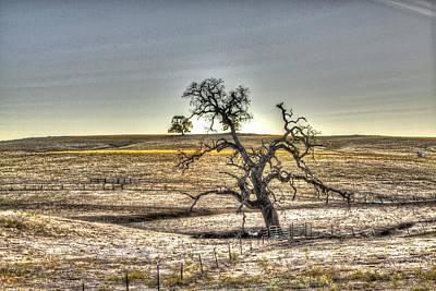 Photograph - Tree Latrobe Road by SC Heffner