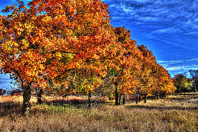 Photograph - Tree Line Fall I by Roger Passman