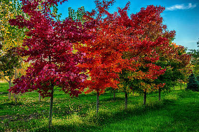 Photograph - Tree Line In Vibrant Colors by Gene Sherrill