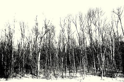 Photograph - Tree Line by Jodie Marie Anne Richardson Traugott          aka jm-ART