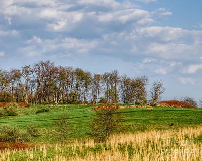 Photograph - Tree Line by Kerri Farley