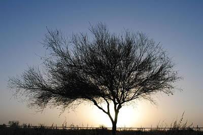 Tree Line Silhouette  Art Print