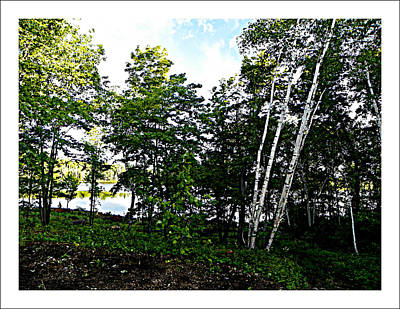 Photograph - Tree Lined Lake by Dianne  Lacourciere