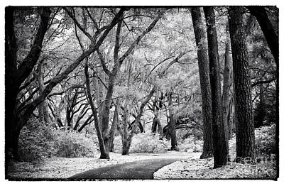 Photograph - Tree Lined Path by John Rizzuto