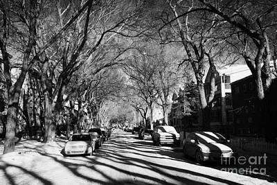 tree lined residential street in mid winter 4th ave Saskatoon Saskatchewan Canada Art Print by Joe Fox