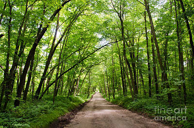 Photograph - Tree Lined Road by Cassie Marie Photography