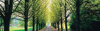 Belgium Photograph - Tree-lined Road Libin Vicinity Belgium by Panoramic Images