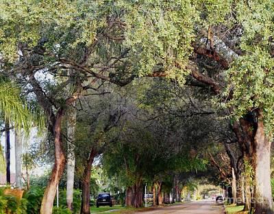Tree Lined Street In Florida Art Print