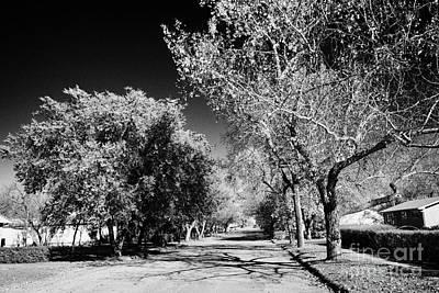 tree lined street in small rural town of Bengough Saskatchewan Canada Art Print by Joe Fox
