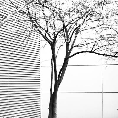 Photograph - Tree Lines by Darryl Dalton