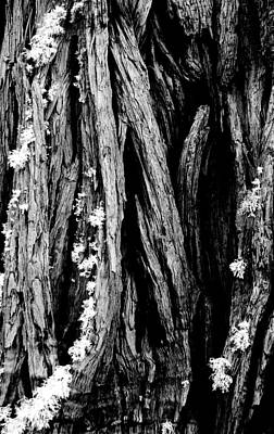 Photograph - Tree Lines by Mick Burkey