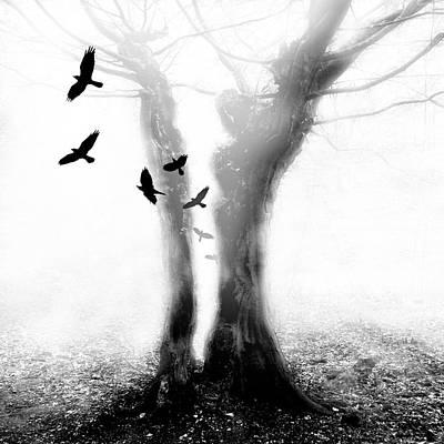 Photograph - Tree by Mariusz Zawadzki