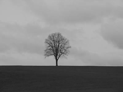 Photograph - Tree by Mark C Ettinger