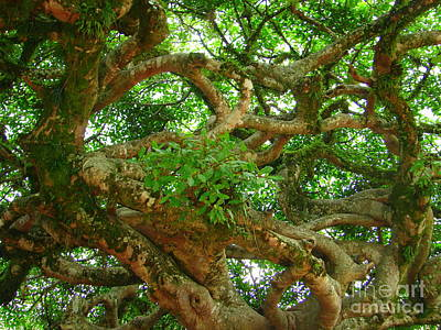 Photograph - Tree Maze by Lew Davis