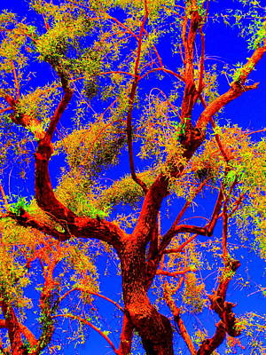 Photograph - Tree Memory by Randall Weidner