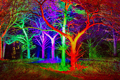 Pink Black Tree Rainbow Photograph - Tree Monsters by Adrian Campfield